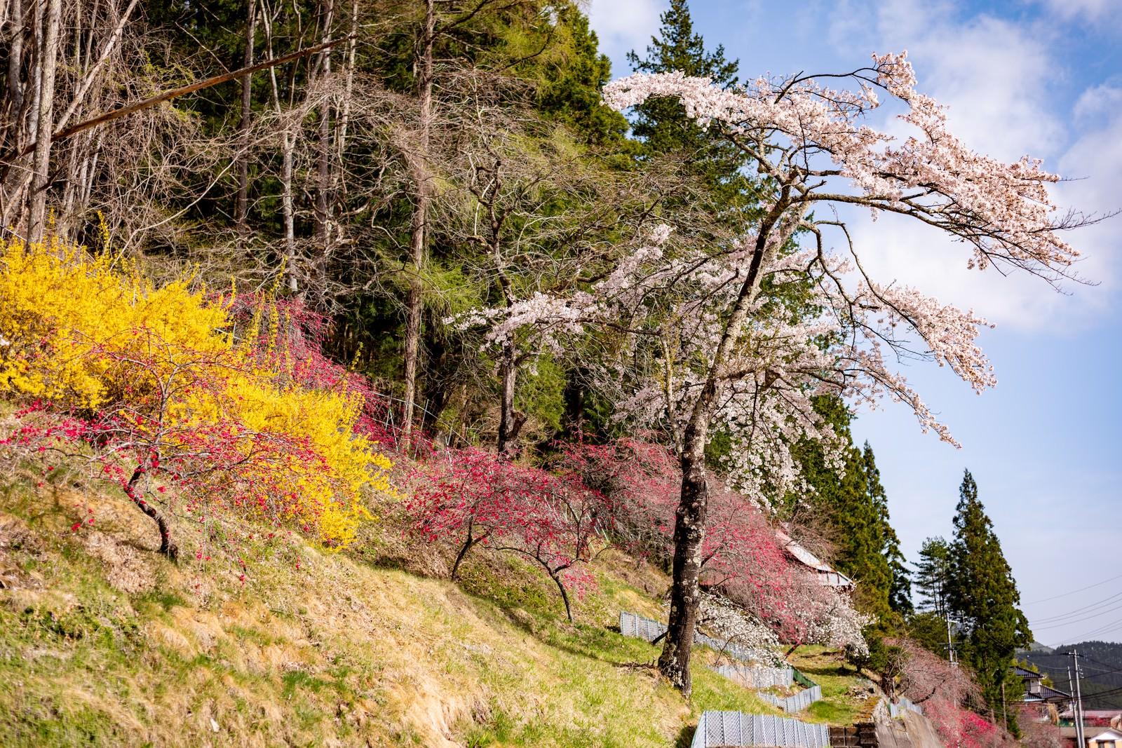 「麓に咲く春色の草木花(余里の一里)」の写真