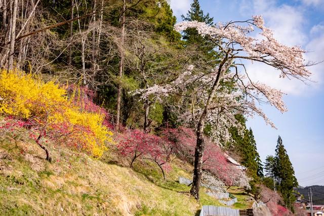 麓に咲く春色の草木花(余里の一里)の写真