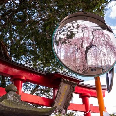 神社の鳥居とカーブミラーに写る枝垂れ桜の写真