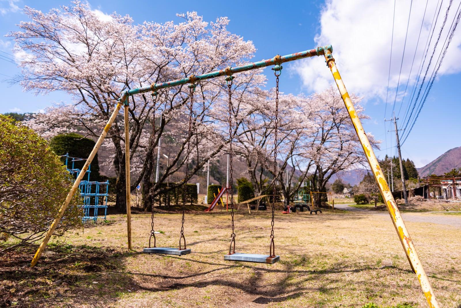 「児童公園に咲く桜とブランコ」の写真