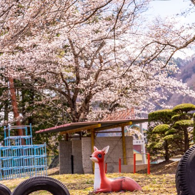 桜咲く児童公園と鹿の遊具の写真