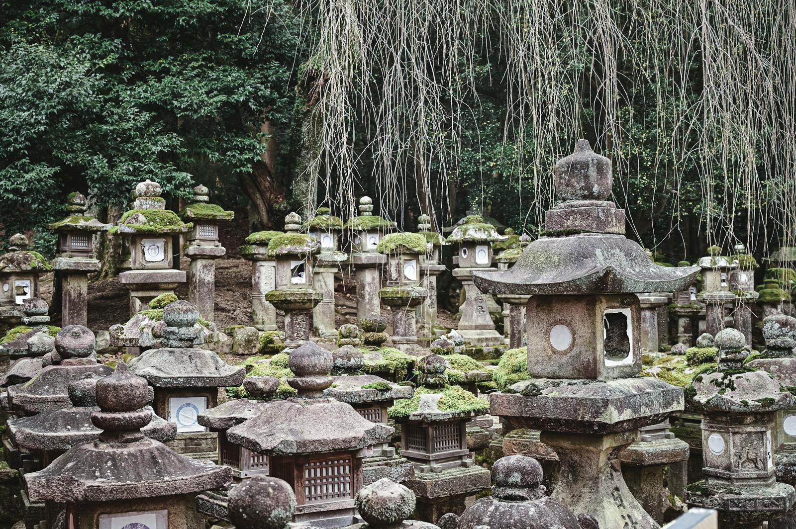 「春日大社の石灯篭」の写真