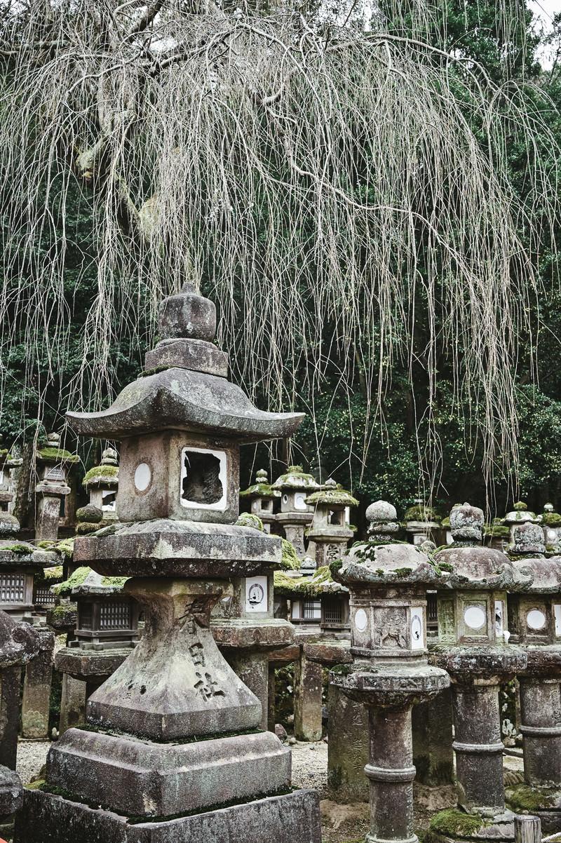 「春日大社の石灯篭と柳」の写真