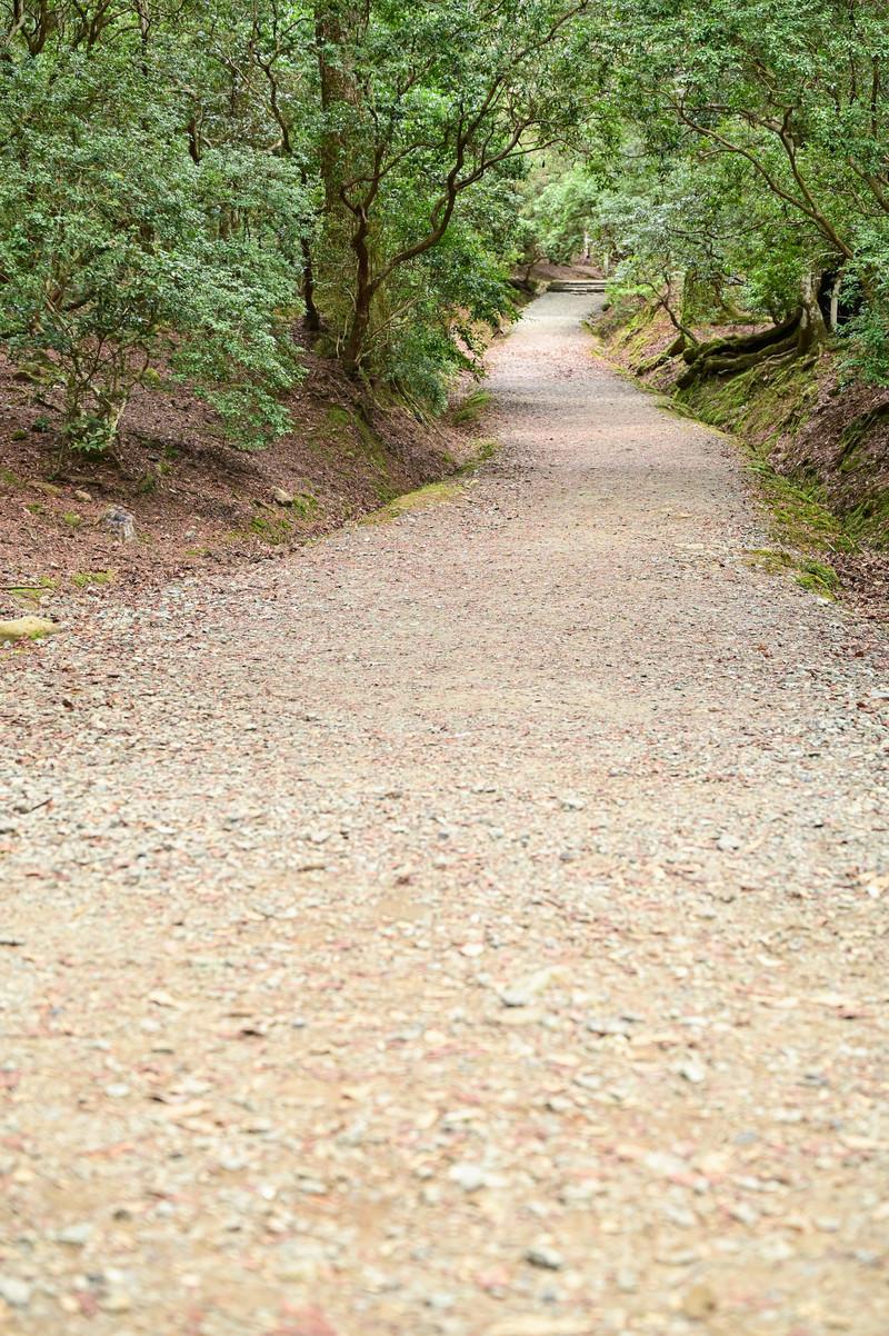 「奥続く砂利の道」の写真