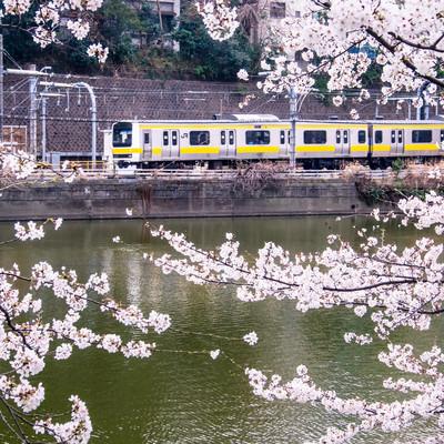 桜と電車の写真