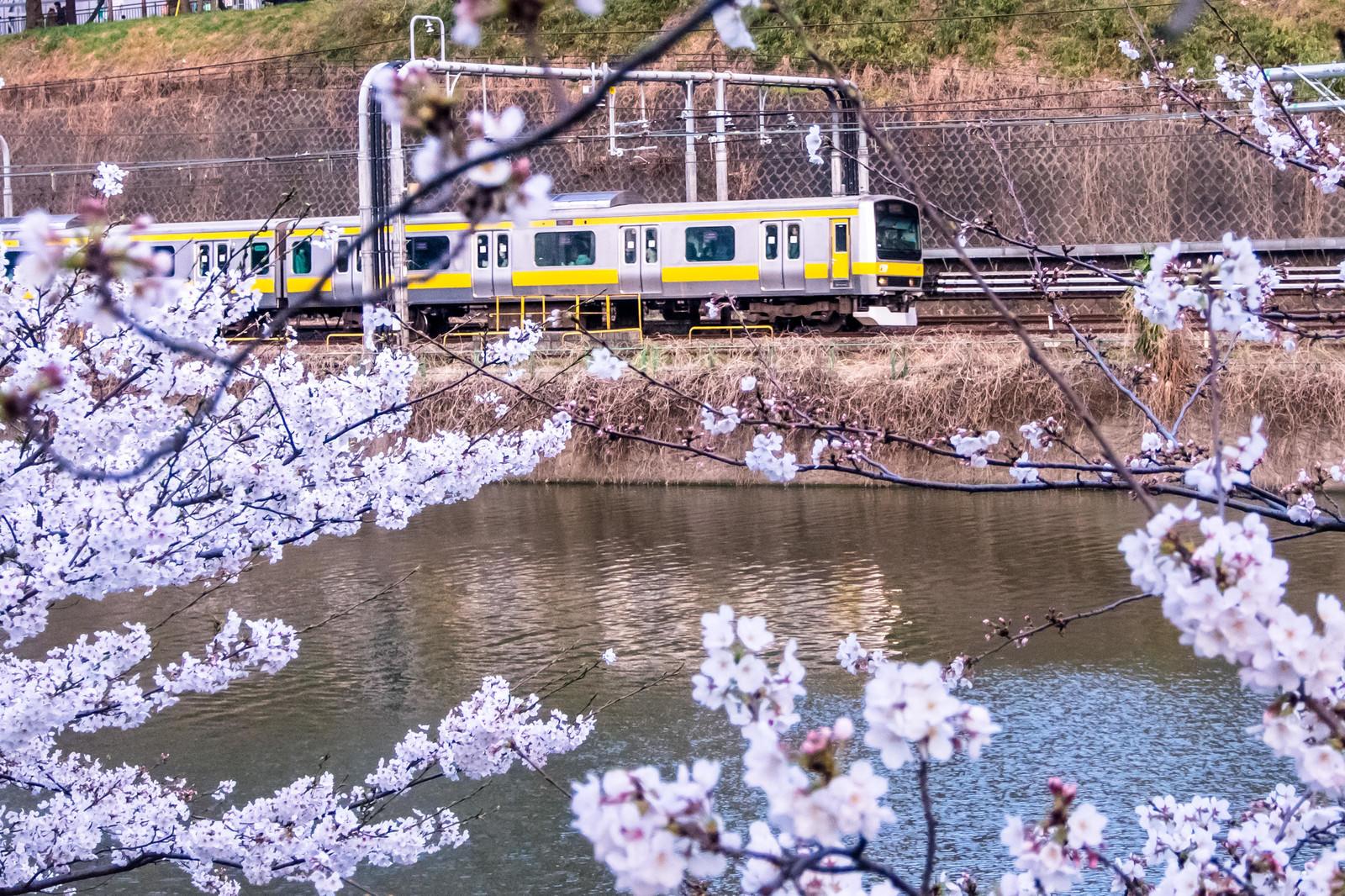 「桜と電車」の写真