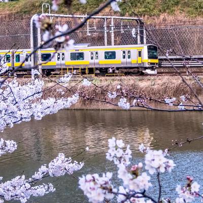 「桜と電車」の写真素材