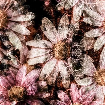 「コスモスの花(フォトモンタージュ)」の写真素材