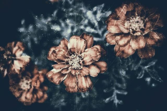 古いフィルムの花の写真
