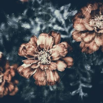 「古いフィルムの花の写真」の写真素材