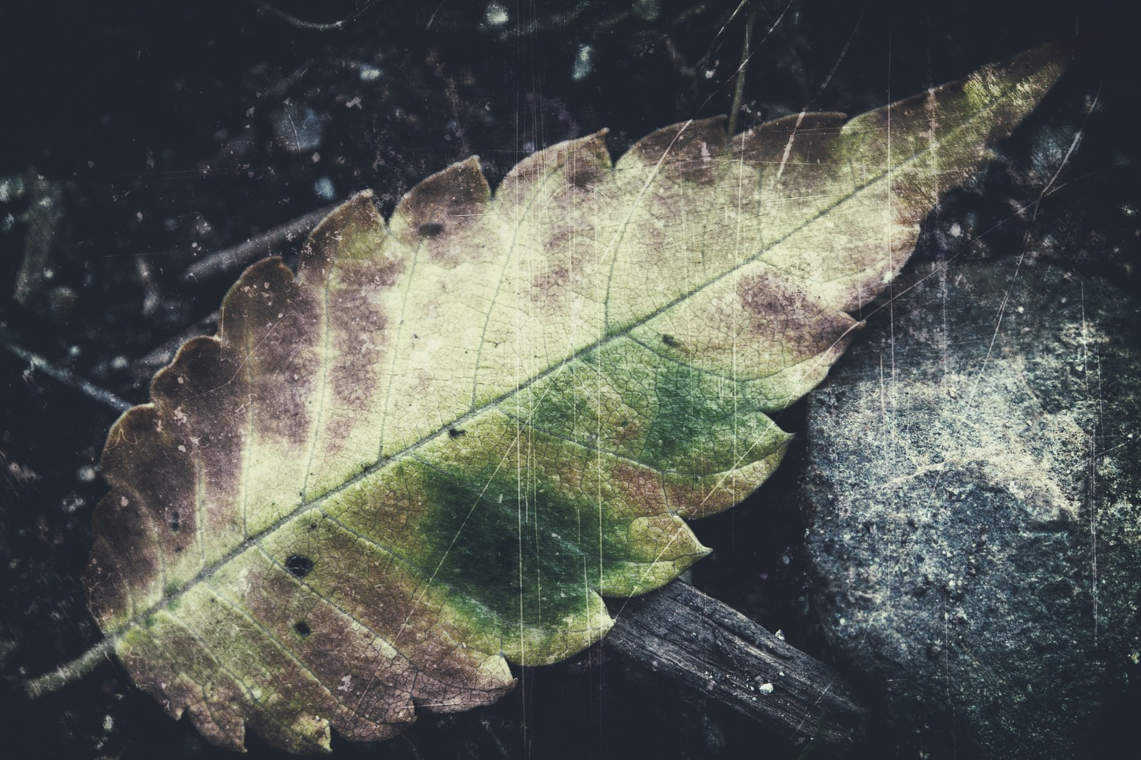 「落ち葉のフィルム」の写真