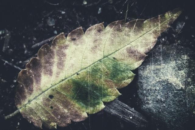 落ち葉のフィルムの写真