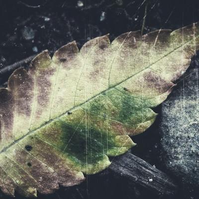 「落ち葉のフィルム写真」の写真素材