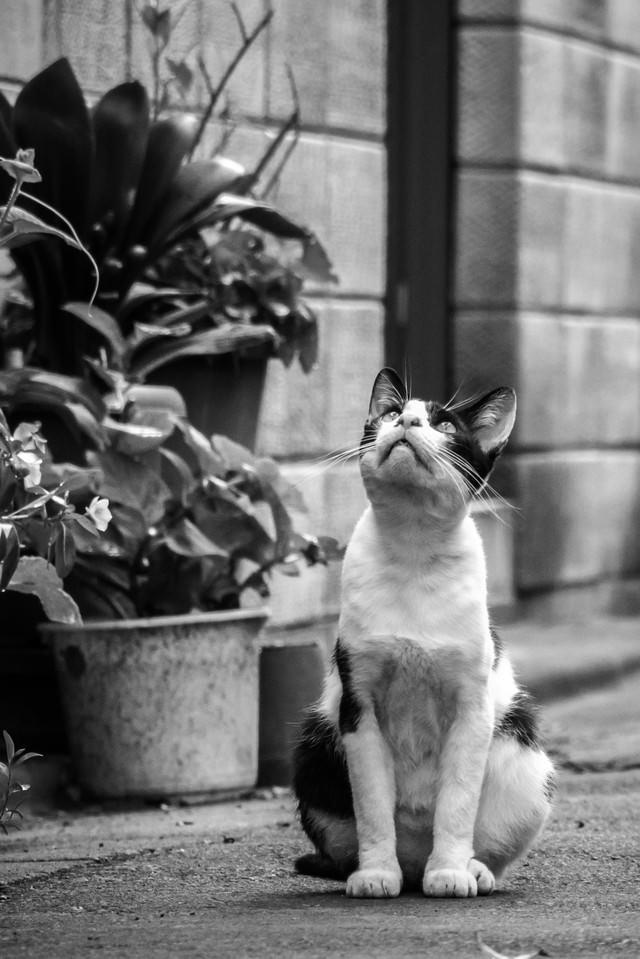 天気を気にする猫の写真