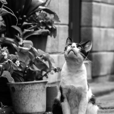 「天気を気にする猫」の写真素材