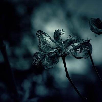 「朽ちゆく花」の写真素材