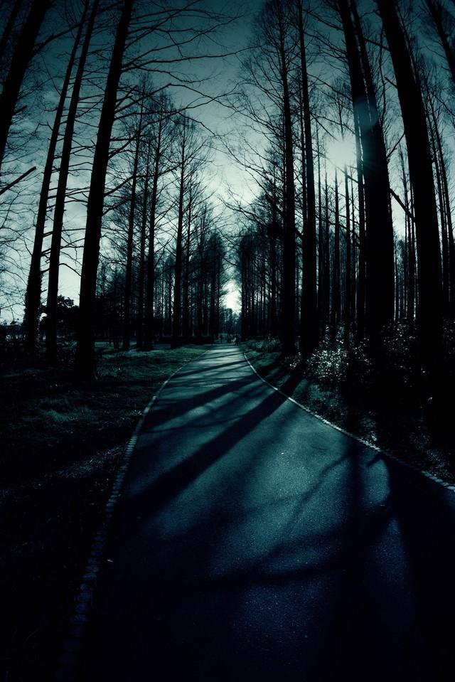 日が落ちた雑木林と道の写真