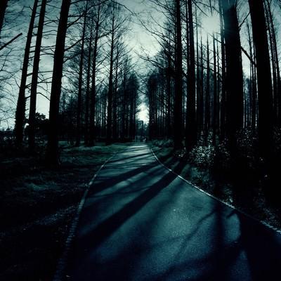 「日が落ちた雑木林と道」の写真素材