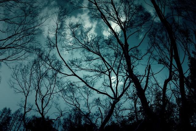 「不吉な森」のフリー写真素材