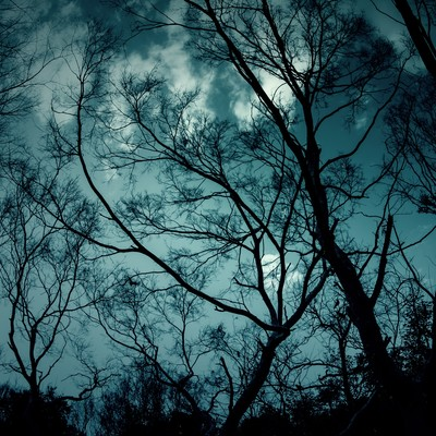 「不吉な森」の写真素材