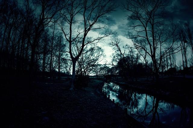 日が落ちた人影のない森の写真