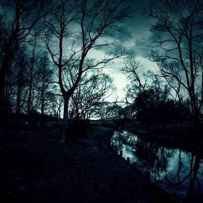 「日が落ちた人影のない森」の写真素材