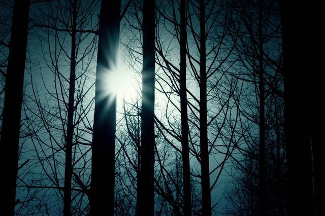 木々の間から覗く太陽の写真