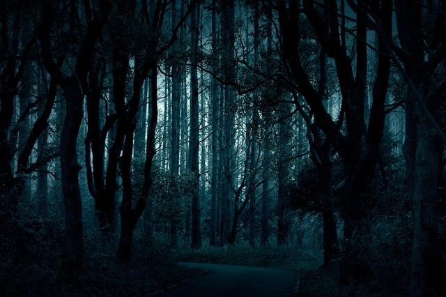 「樹海へとつづく道」のフリー写真素材