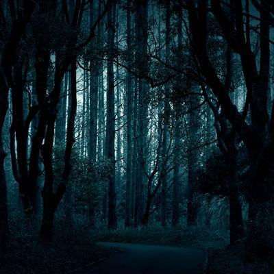 樹海へとつづく道の写真