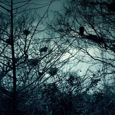 「雑木林と不気味なカラスの巣」の写真素材