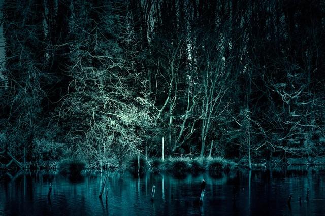 「魔物が棲んでいそうな森」のフリー写真素材