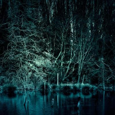 「魔物が棲んでいそうな森」の写真素材