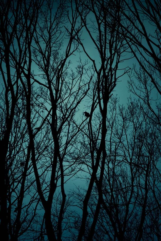 不気味な木々のシルエットと鴉の写真