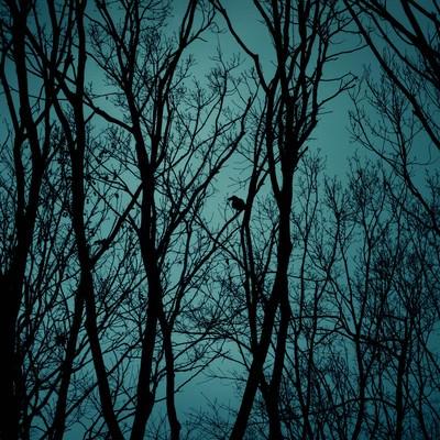 「不気味な木々のシルエットと鴉」の写真素材