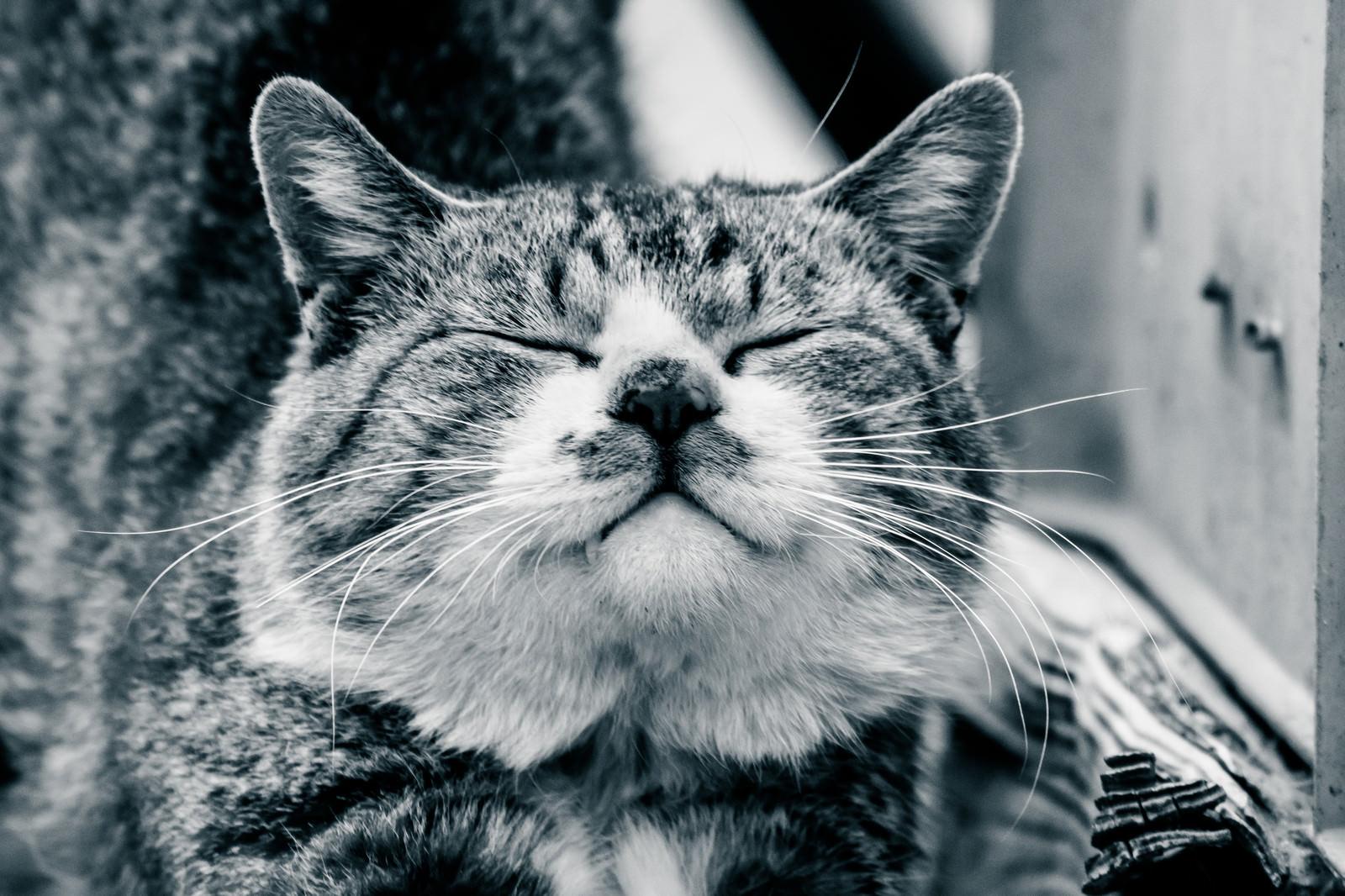 「ご満悦な猫」の写真