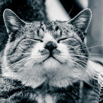 「ご満悦な猫」の写真素材
