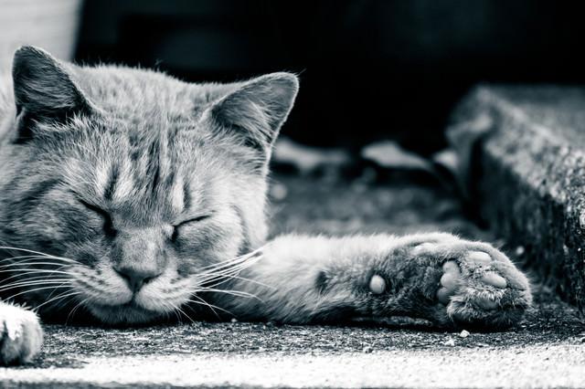 眠るネッコと肉球の写真