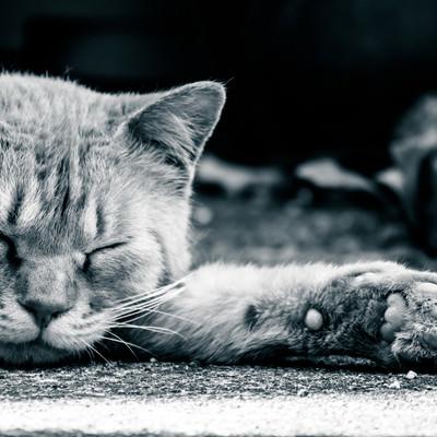 「眠るネッコと肉球」の写真素材