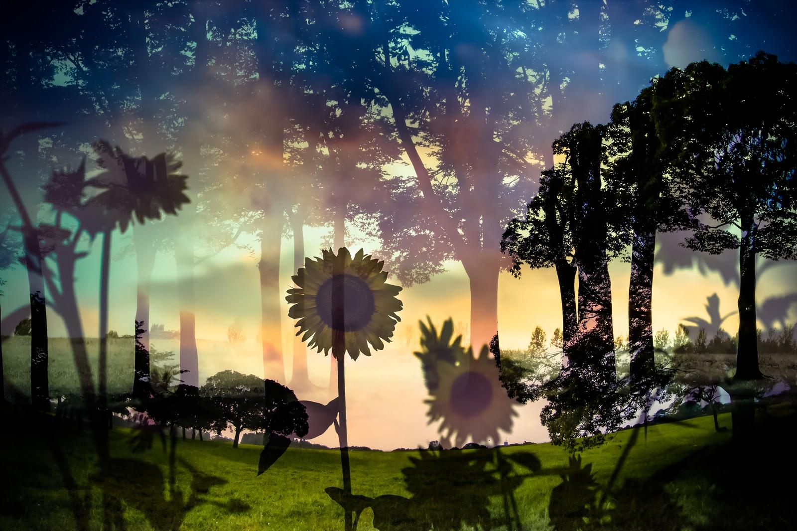 「虚像の夏(フォトモンタージュ)虚像の夏(フォトモンタージュ)」のフリー写真素材を拡大