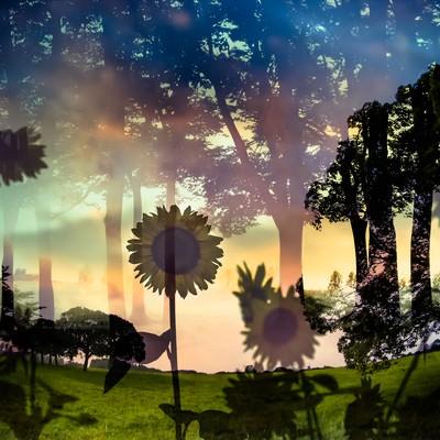 虚像の夏(フォトモンタージュ)の写真
