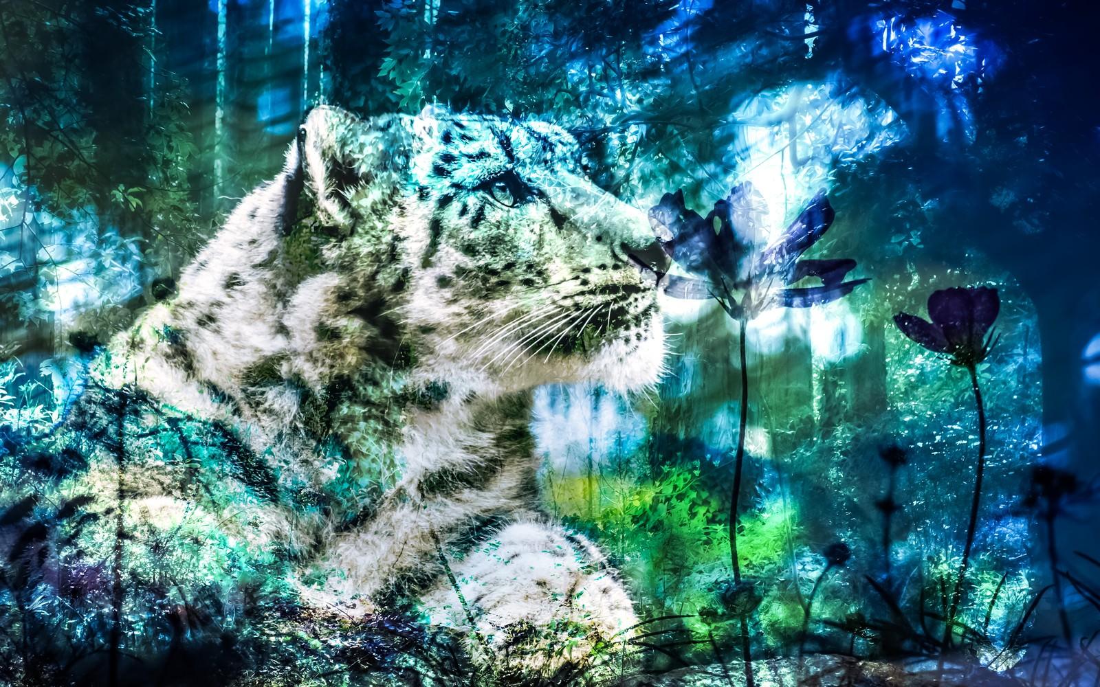 「虎と森のやすらぎ(フォトモンタージュ)」の写真