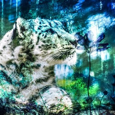 虎と森のやすらぎ(フォトモンタージュ)の写真
