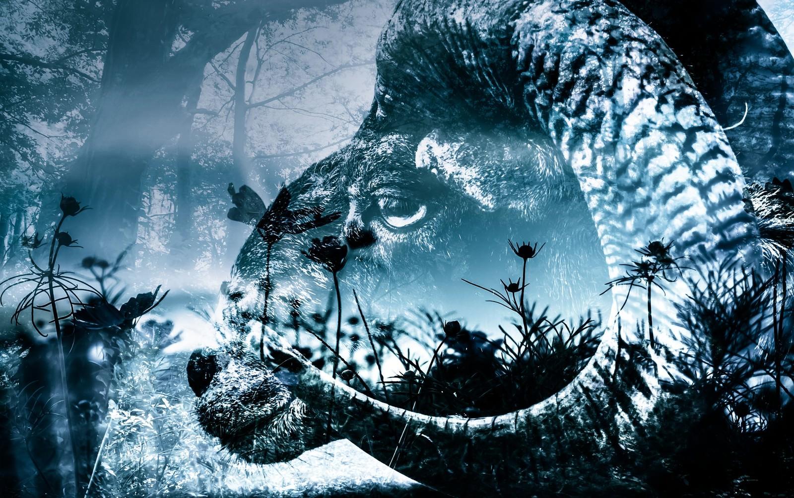 「黒山羊と森(フォトモンタージュ)」の写真