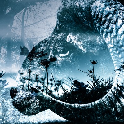 黒山羊と森(フォトモンタージュ)の写真