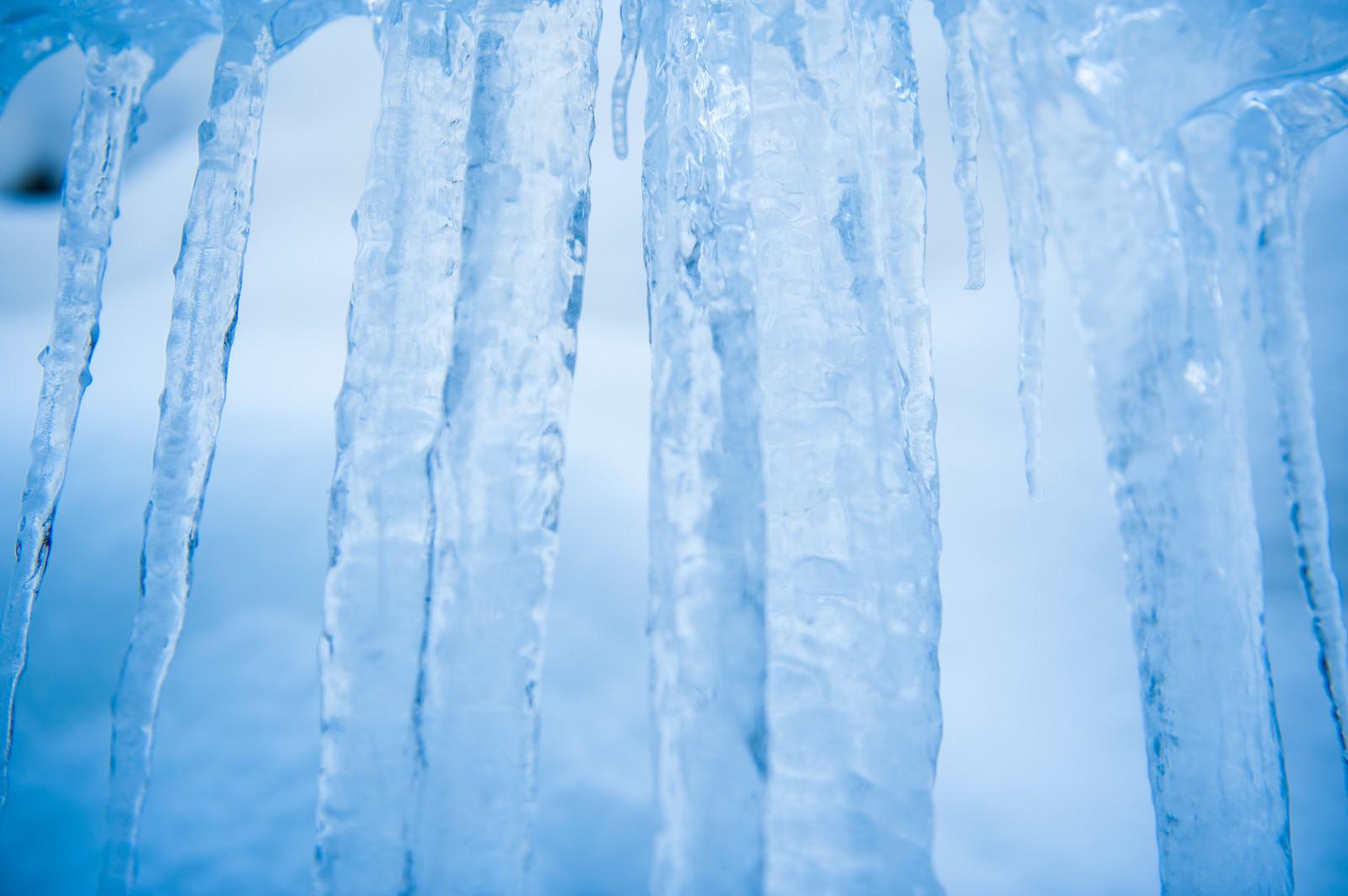 「積雪が透けて見える氷柱(つらら)」の写真