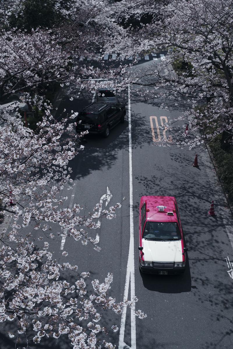 「桜咲く道を走るタクシー」の写真