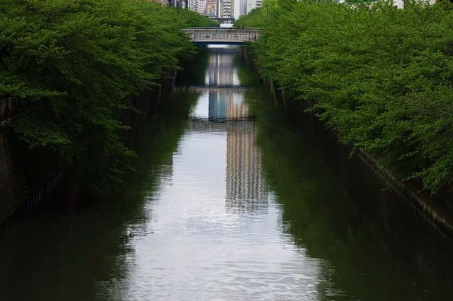 青々しい目黒川の木々の写真