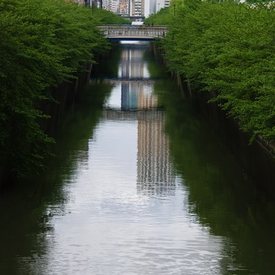 「青々しい目黒川の木々」の写真素材