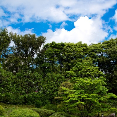 「緑の多い庭園と青空」の写真素材