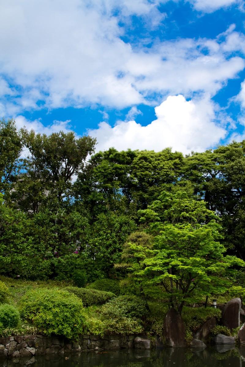 「緑の多い庭園と青空」の写真